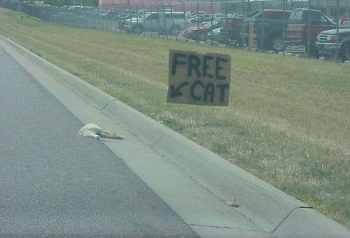 freecat.jpg