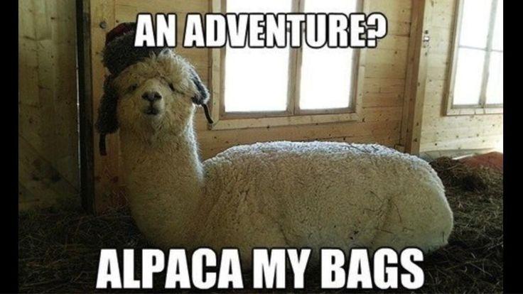Animals-Alpaca.jpg
