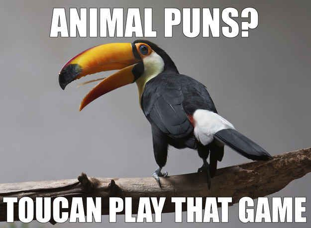 Animals-AnimalPuns.jpg