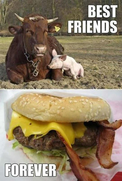 Animals-BestFriendsForever.jpg