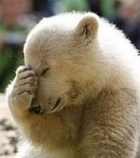 Arrgh-facepalm-bear.jpg
