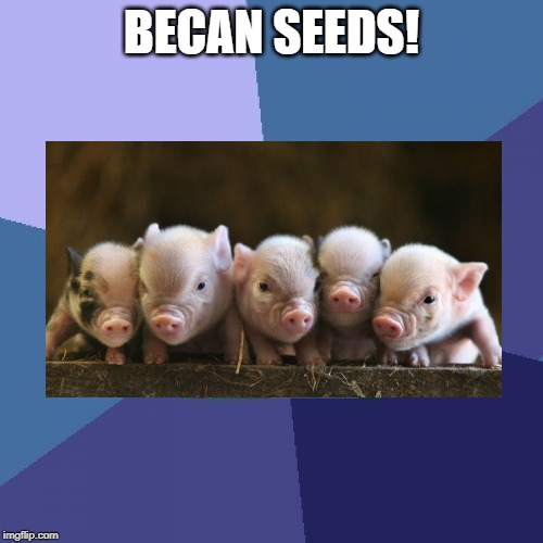 Bacon-BecanSeeds.jpg