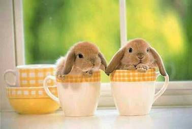 Bunny-Cup-Bunnies.jpg