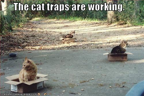 Cats-CatTraps.jpg