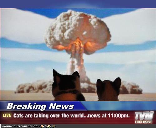 Cats-cat-domination1.jpg