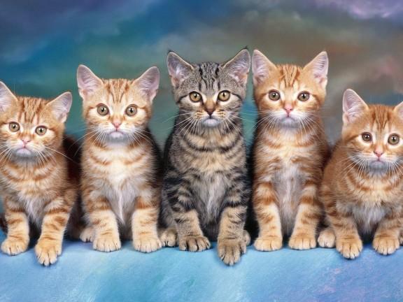 Cats-five-kittens.jpg