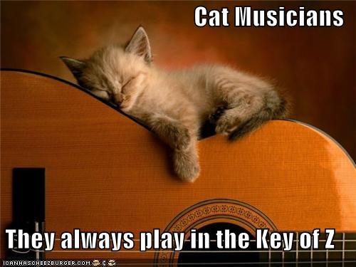 Cats-kitten-sleeps-on-guitar.jpg