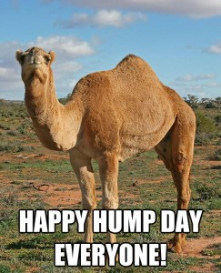 Day-camel-on-hump-day0.jpg