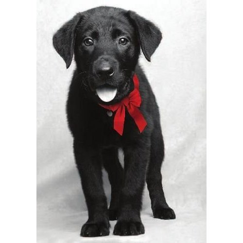 Dogs-Black-dog-red-bow.jpg
