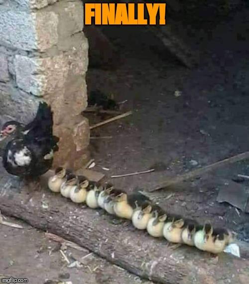 [Image: Ducks-DucksInARow.jpg]