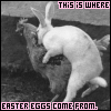 Holidays-eastereggscomefromthis.png