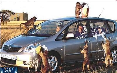 Monkeys-car-wash.jpg